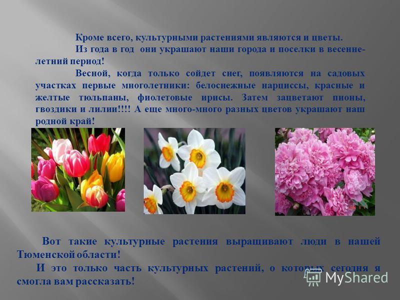 Кроме всего, культурными растениями являются и цветы. Из года в год они украшают наши города и поселки в весенне- летний период! Весной, когда только сойдет снег, появляются на садовых участках первые многолетники: белоснежные нарциссы, красные и жел