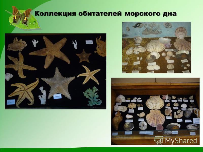 Коллекция обитателей морского дна