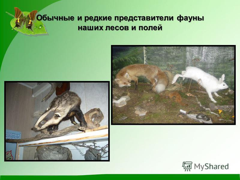 Обычные и редкие представители фауны наших лесов и полей