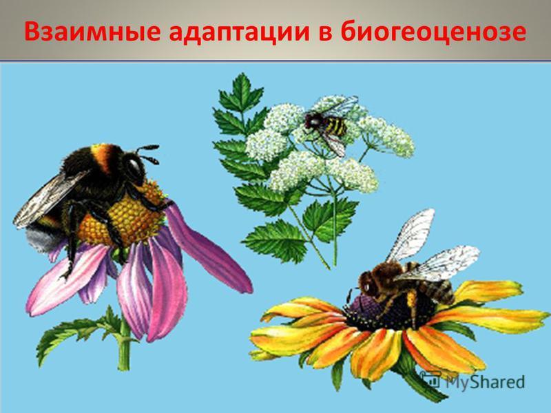Взаимные адаптации в биогеоценозе