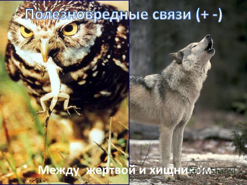 Между жертвой и хищником