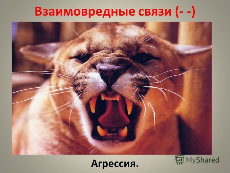 Взаимовредные связи (- -) Агрессия.