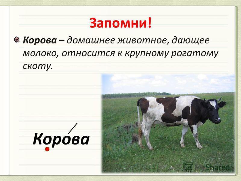 Корова – домашнее животное, дающее молоко, относится к крупному рогатому скоту. Корова