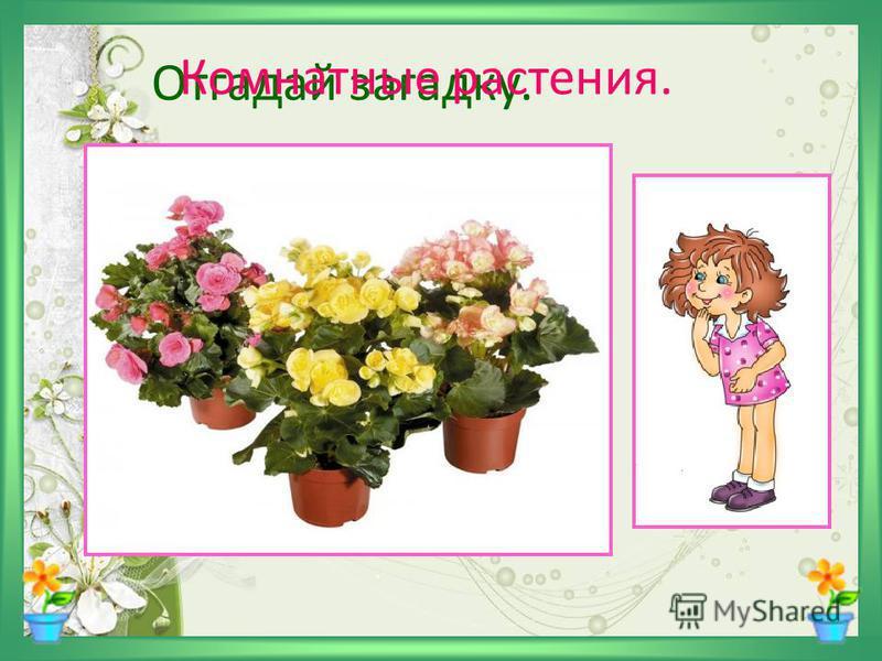 Отгадай загадку. Очищают воздух, Создают уют, На окнах зеленеют И зимой цветут. Комнатные растения.