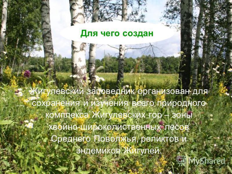 Жигулевский заповедник организован для сохранения и изучения всего природного комплекса Жигулевских гор – зоны хвойно-широколиственных лесов Среднего Поволжья, реликтов и эндемиков Жигулей. Для чего создан