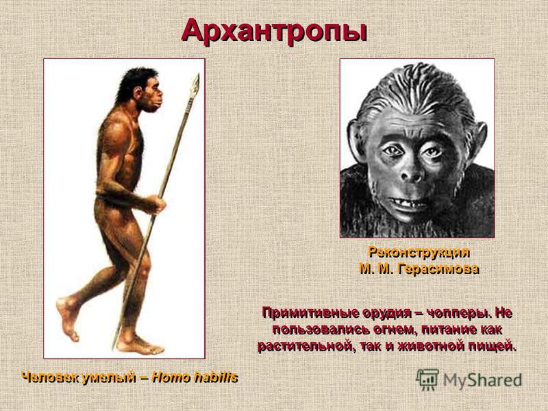 Архантропы Реконструкция М. М. Герасимова Человек умелый – Homo habilis Примитивные орудия – чопперы. Не пользовались огнем, питание как растительной, так и животной пищей.