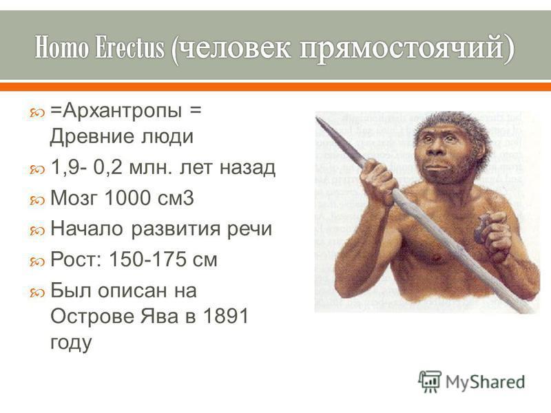 = Архантропы = Древние люди 1,9- 0,2 млн. лет назад Мозг 1000 см 3 Начало развития речи Рост : 150-175 см Был описан на Острове Ява в 1891 году