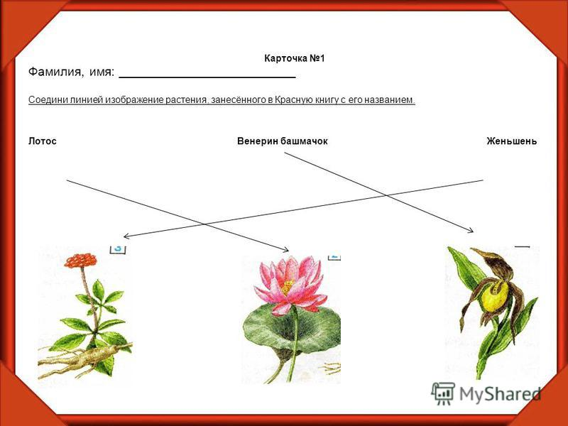 Карточка 1 Фамилия, имя: _________________________ Соедини линией изображение растения, занесённого в Красную книгу с его названием. Лотос Венерин башмачок Женьшень
