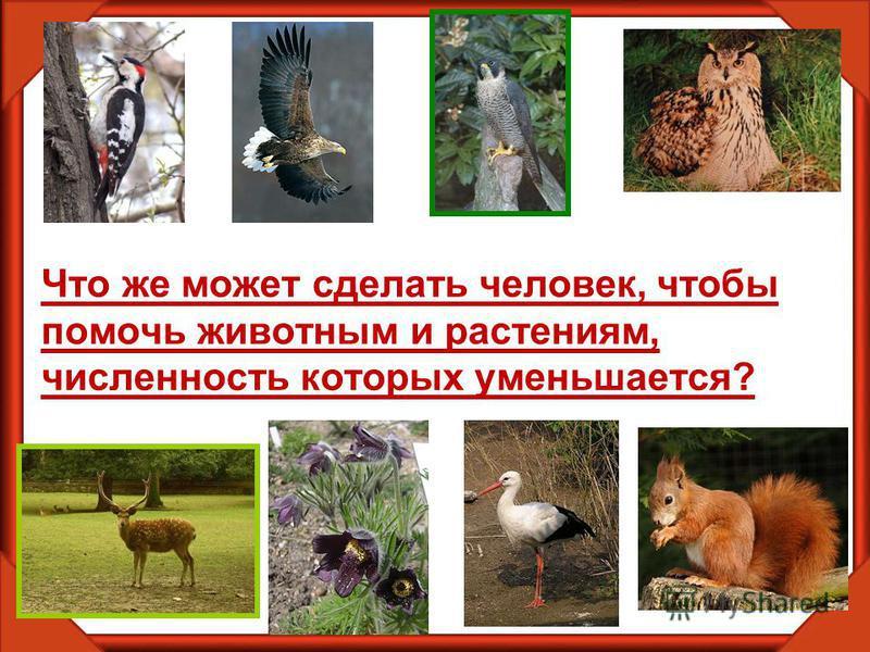 Что же может сделать человек, чтобы помочь животным и растениям, численность которых уменьшается?