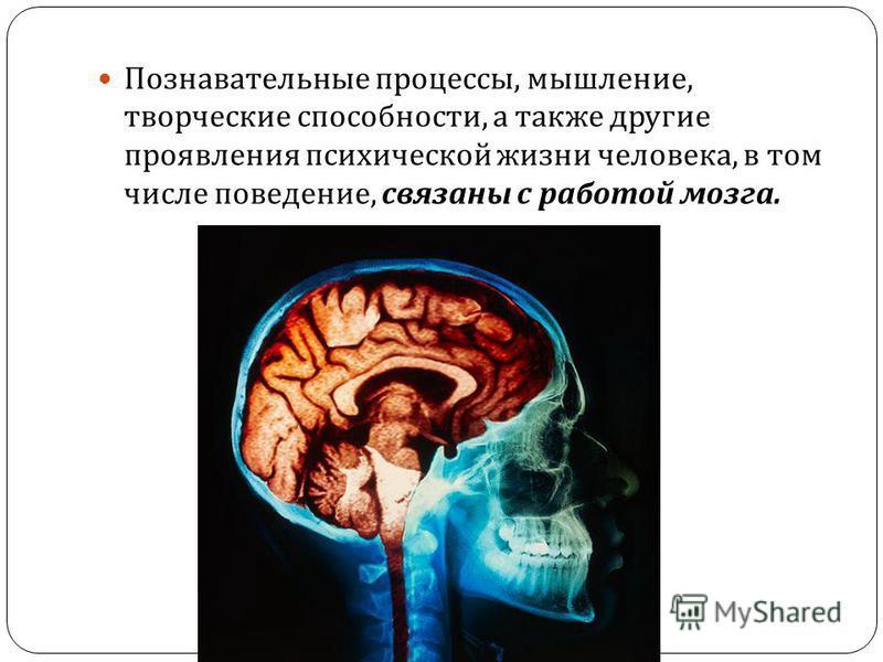 Познавательные процессы, мышление, творческие способности, а также другие проявления психической жизни человека, в том числе поведение, связаны с работой мозга.