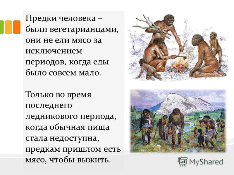 Предки человека – были вегетарианцами, они не ели мясо за исключением периодов, когда еды было совсем мало. Только во время последнего ледникового периода, когда обычная пища стала недоступна, предкам пришлом есть мясо, чтобы выжить.