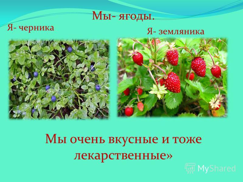 Мы- ягоды. Я- черника Я- земляника Мы очень вкусные и тоже лекарственные»
