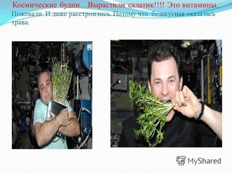 Космические будни…Вырастили салатик!!!! Это витамины. Пожевали. И даже расстроились. Потому что безвкусная оказалась трава.