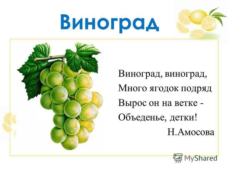 Виноград, виноград, Много ягодок подряд Вырос он на ветке - Объеденье, детки! Н.Амосова Виноград