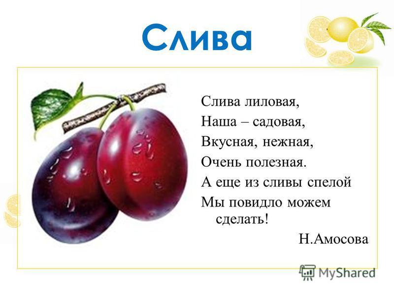 Слива Слива лиловая, Наша – садовая, Вкусная, нежная, Очень полезная. А еще из сливы спелой Мы повидло можем сделать! Н.Амосова