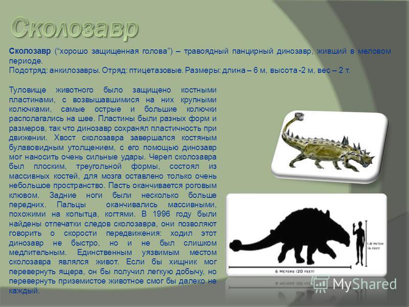 Туловище животного было защищено костными пластинами, с возвышавшимися на них крупными колючками, самые острые и большие колючки располагались на шее. Пластины были разных форм и размеров, так что динозавр сохранял пластичность при движении. Хвост ск