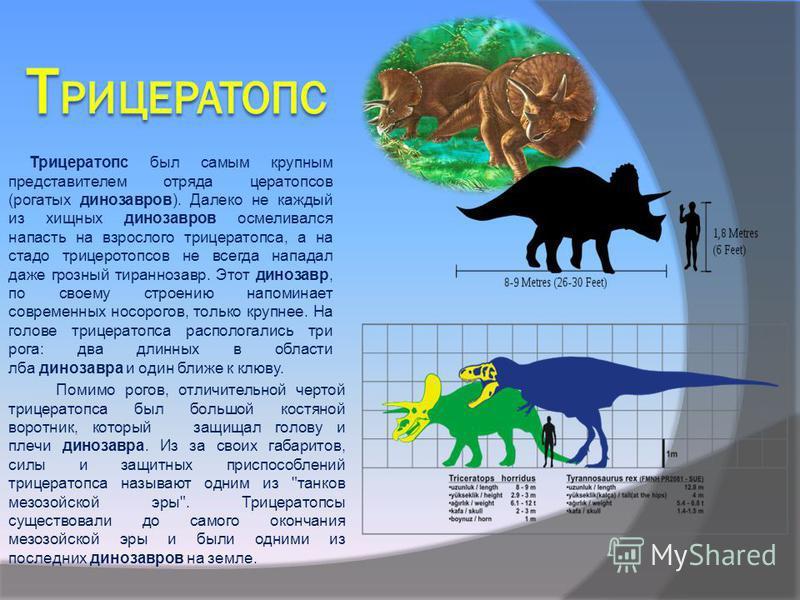 Трицератопс был самым крупным представителем отряда цератопсов (рогатых динозавров). Далеко не каждый из хищных динозавров осмеливался напасть на взрослого трицератопса, а на стадо трицеротопсов не всегда нападал даже грозный тираннозавр. Этот диноза