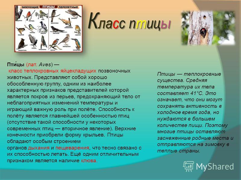 К ласс птицы Пти́цы (лат. Aves) класс теплокровных яйцекладущих позвоночных животных. Представляют собой хорошо обособленную группу, одним из наиболее характерных признаков представителей которой является покров из перьев, предохраняющий тело от небл
