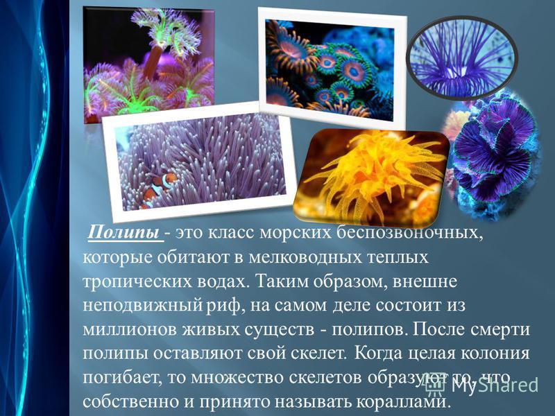 Полипы - это класс морских беспозвоночных, которые обитают в мелководных теплых тропических водах. Таким образом, внешне неподвижный риф, на самом деле состоит из миллионов живых существ - полипов. После смерти полипы оставляют свой скелет. Когда цел