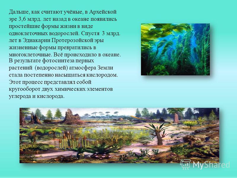 Дальше, как считают учёные, в Архейской эре 3,6 млрд. лет назад в океане появились простейшие формы жизни в виде одноклеточных водорослей. Спустя 3 млрд. лет в Эдиакарии Протерозойской эры жизненные формы превратились в многоклеточные. Всё происходил