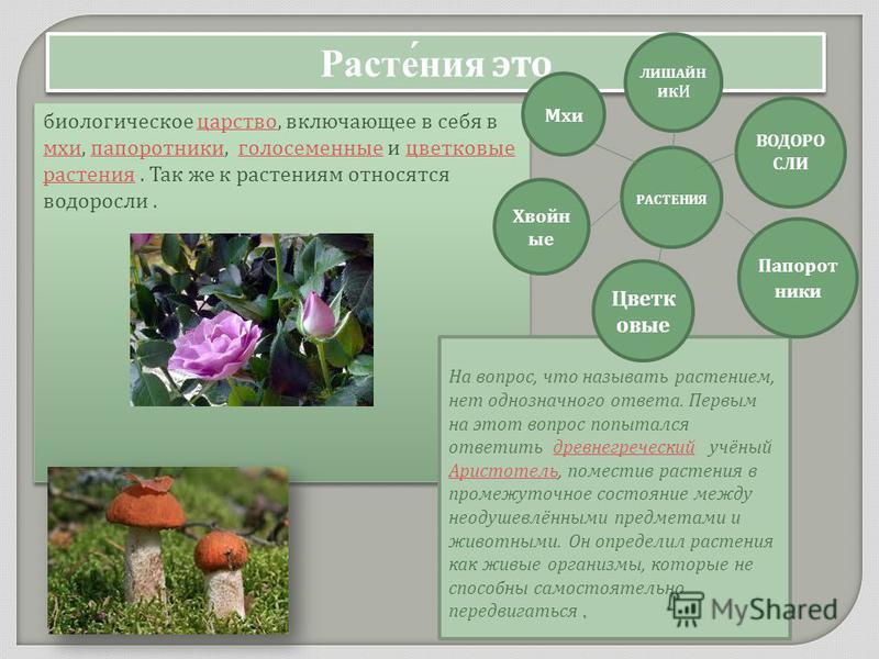 Расте́ния это биологическое царство, включающее в себя в мхи, папоротники, голосеменные и цветковые растения. Так же к растениям относятся водоросли. царство мхи папоротники голосеменные цветковые растения биологическое царство, включающее в себя в м