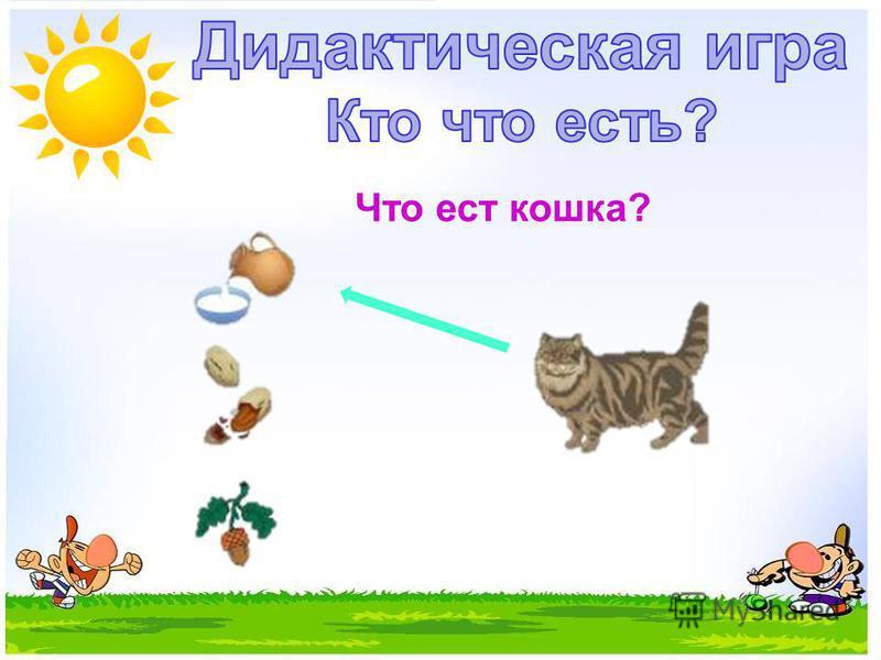 Что ест кошка?
