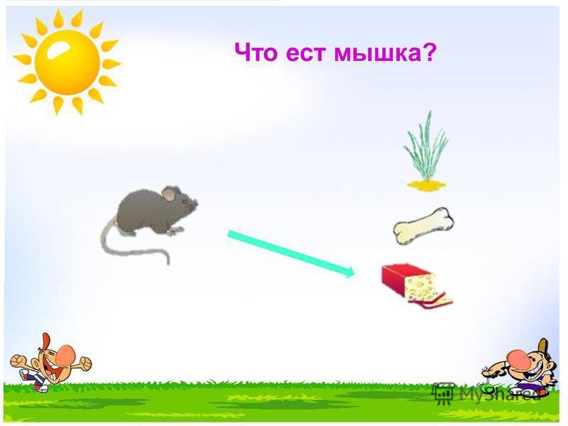Что ест мышка?