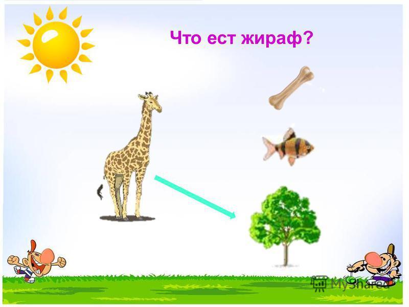 Что ест жираф?