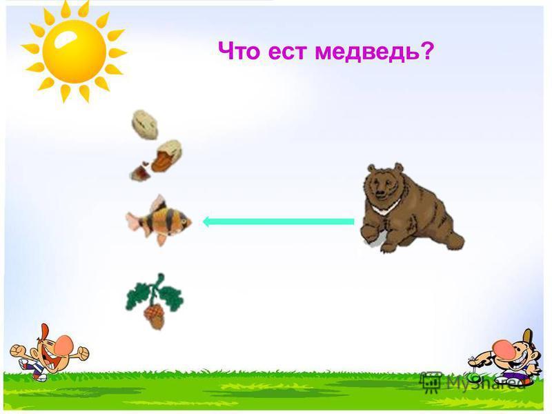 Что ест медведь?