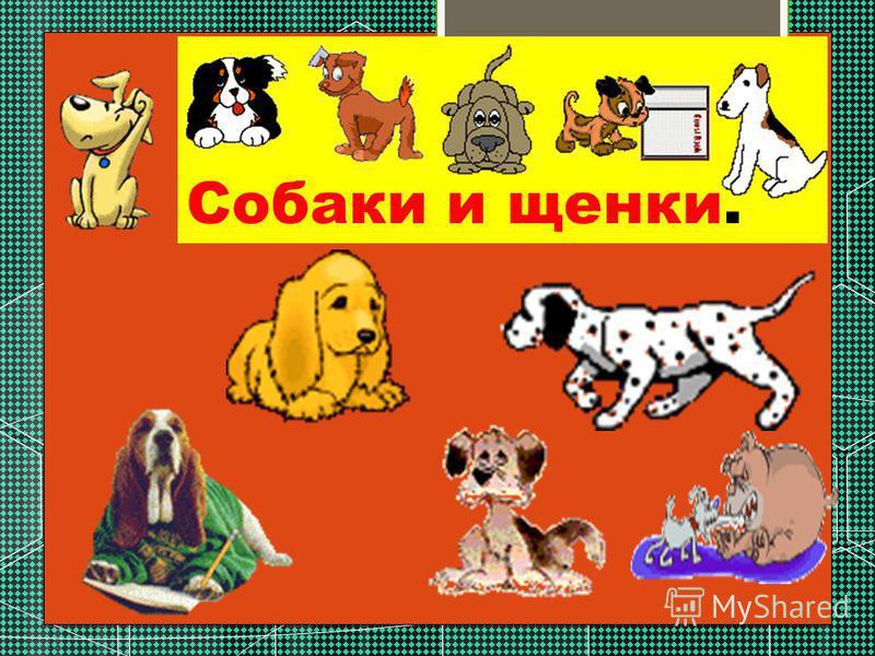 Собаки и щенки.