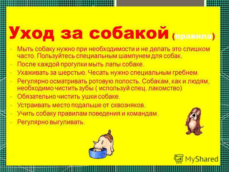 Уход за собакой (правила) : Мыть собаку нужно при необходимости и не делать это слишком часто. Пользуйтесь специальным шампунем для собак. После каждой прогулки мыть лапы собаке. Ухаживать за шерстью. Чесать нужно специальным гребнем. Регулярно осмат