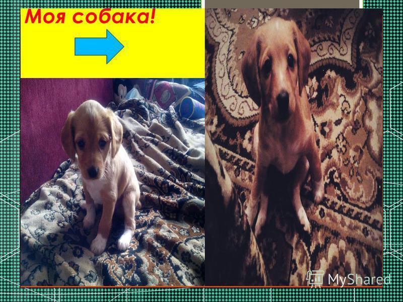 Моя собака!