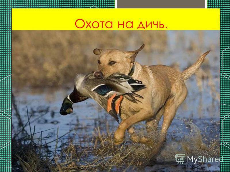 Охота на дичь.