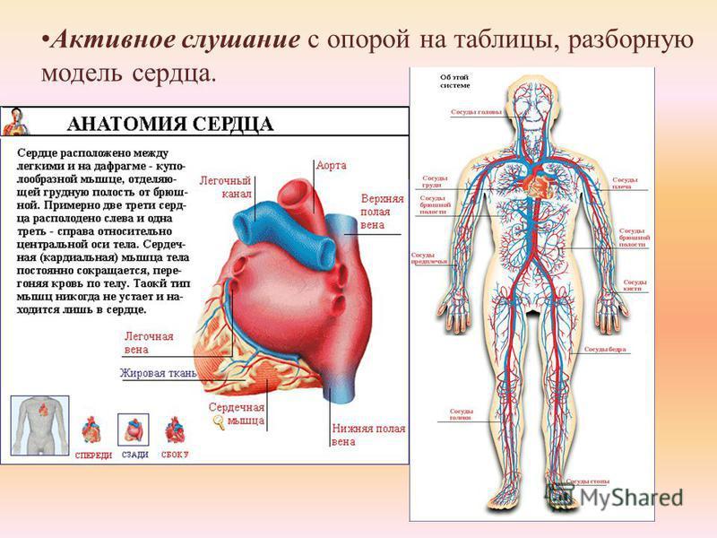 Активное слушание с опорой на таблицы, разборную модель сердца.