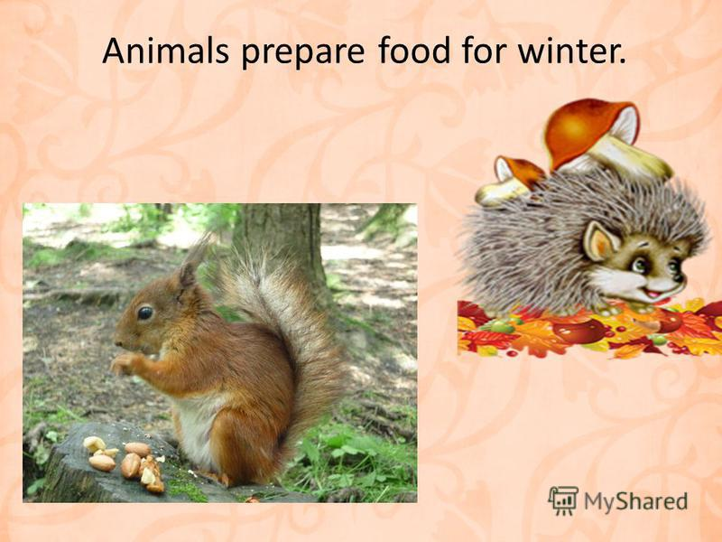 Animals prepare food for winter.