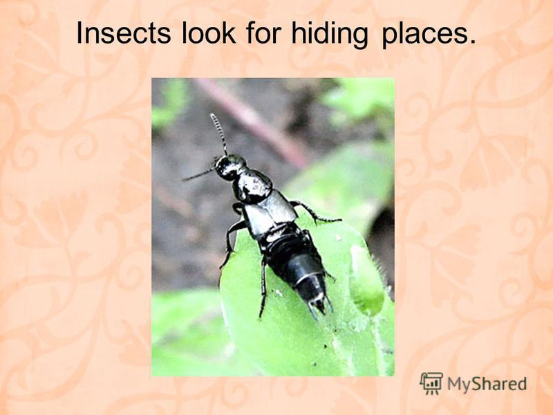 Insects look for hiding places.