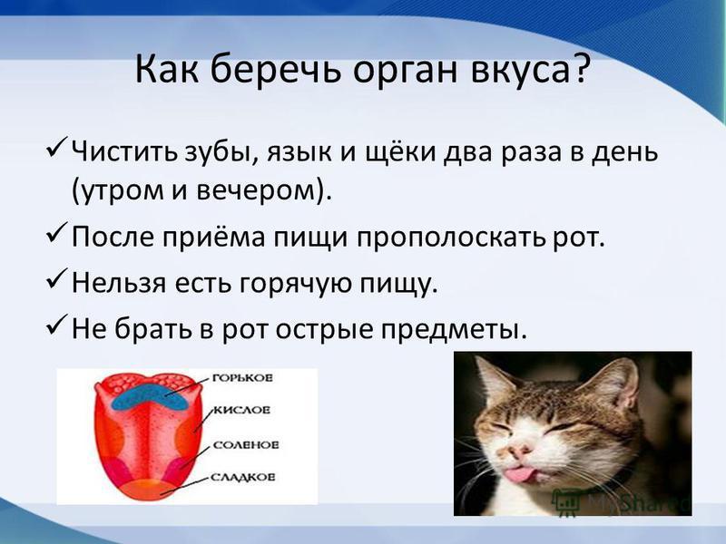 Как беречь орган вкуса? Чистить зубы, язык и щёки два раза в день (утром и вечером). После приёма пищи прополоскать рот. Нельзя есть горячую пищу. Не брать в рот острые предметы.
