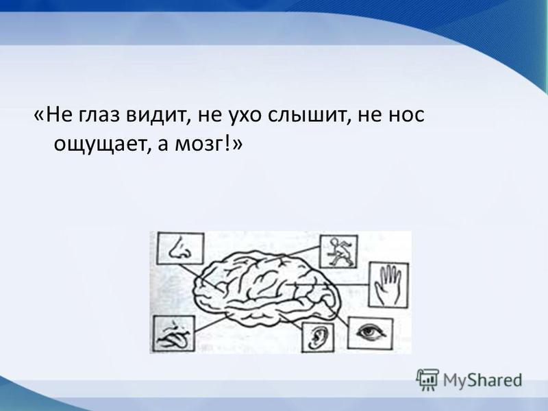 «Не глаз видит, не ухо слышит, не нос ощущает, а мозг!»