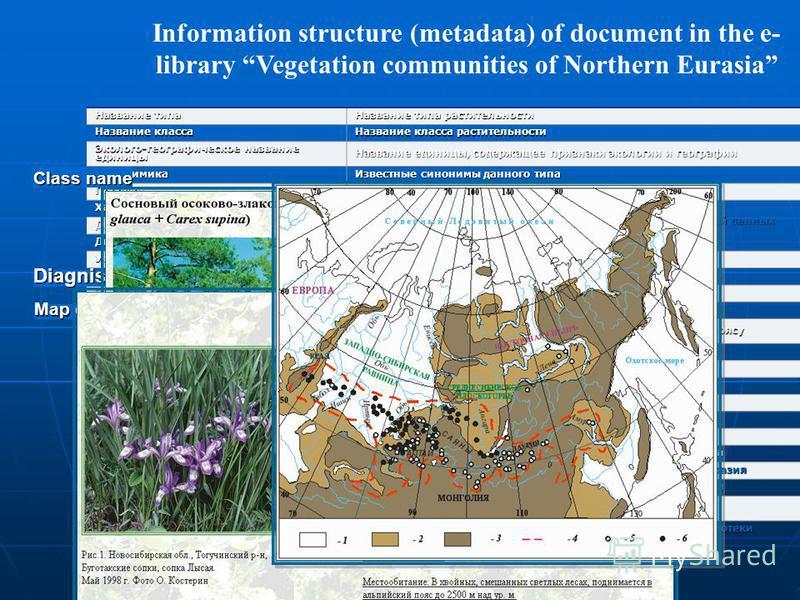 Information structure (metadata) of document in the e- library Vegetation communities of Northern Eurasia Название типа Название типа растительности Название класса Название класса растительности Эколого-географическое название единицы Название едини