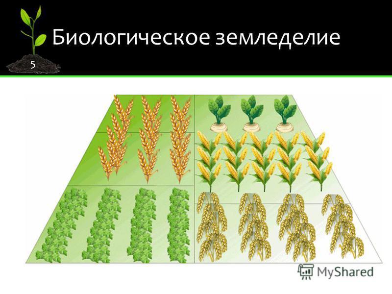 Биологическое земледелие 5