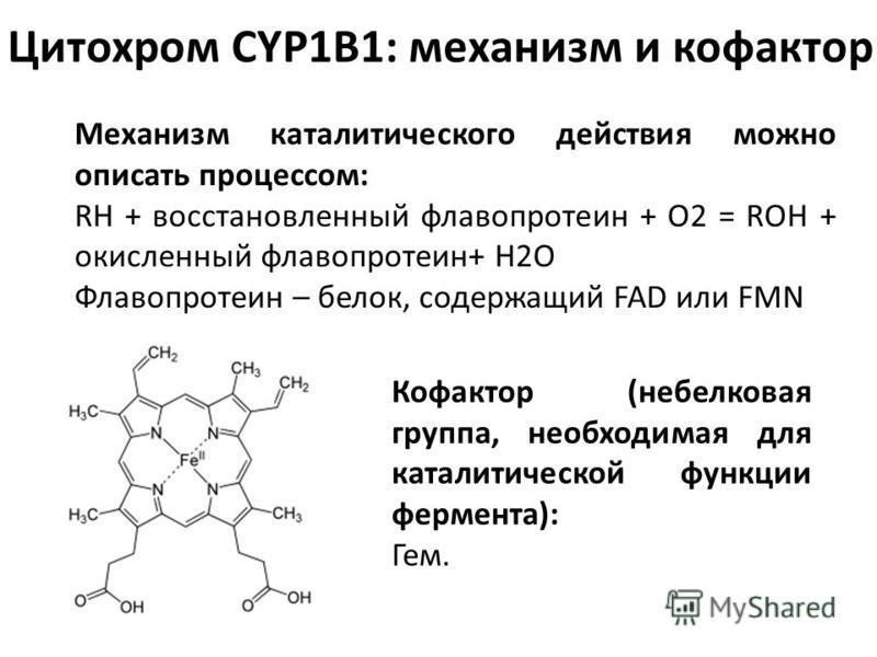 Цитохром CYP1B1: механизм и кофактор Механизм каталитического действия можно описать процессом: RH + восстановленный флавопротеин + O2 = ROH + окисленный флавопротеин+ H2O Флавопротеин – белок, содержащий FAD или FMN Кофактор (небелковая группа, необ
