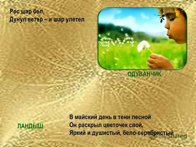Рос шар бел, Дунул ветер – и шар улетел В майский день в тени лесной Он раскрыл цветочек свой, Яркий и душистый, бело-серебристый ОДУВАНЧИК ЛАНДЫШ