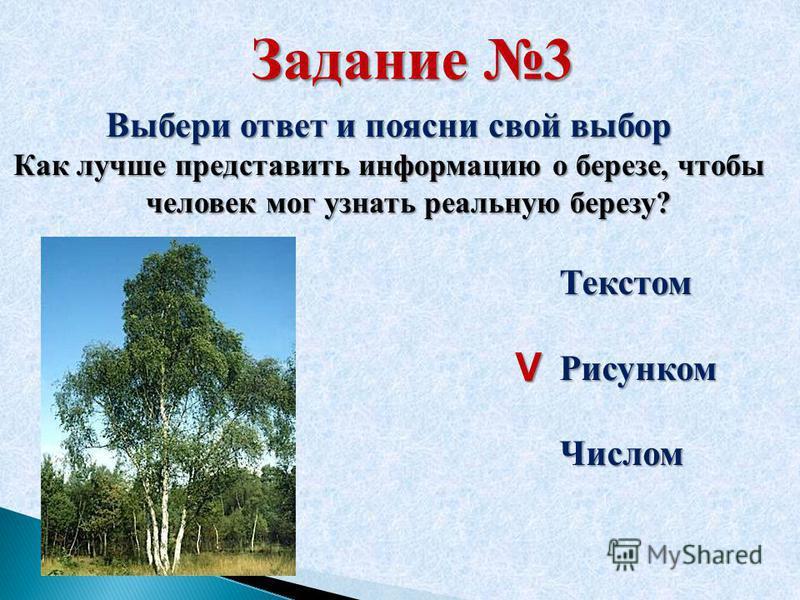 Задание 3 Выбери ответ и поясни свой выбор Как лучше представить информацию о березе, чтобы человек мог узнать реальную березу? Текстом РисункомЧислом V