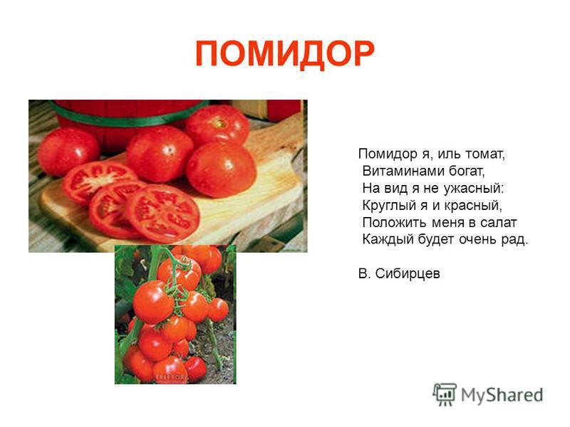 ПОМИДОР Помидор я, иль томат, Витаминами богат, На вид я не ужасный: Круглый я и красный, Положить меня в салат Каждый будет очень рад. В. Сибирцев