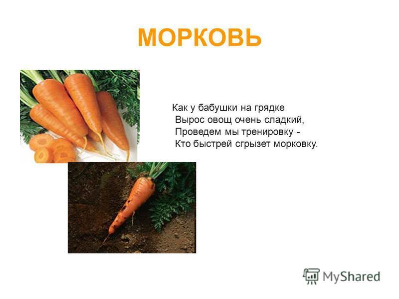 МОРКОВЬ Как у бабушки на грядке Вырос овощ очень сладкий, Проведем мы тренировку - Кто быстрей сгрызет морковку.