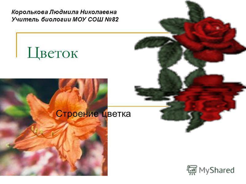 Цветок Строение цветка Королькова Людмила Николаевна Учитель биологии МОУ СОШ 82