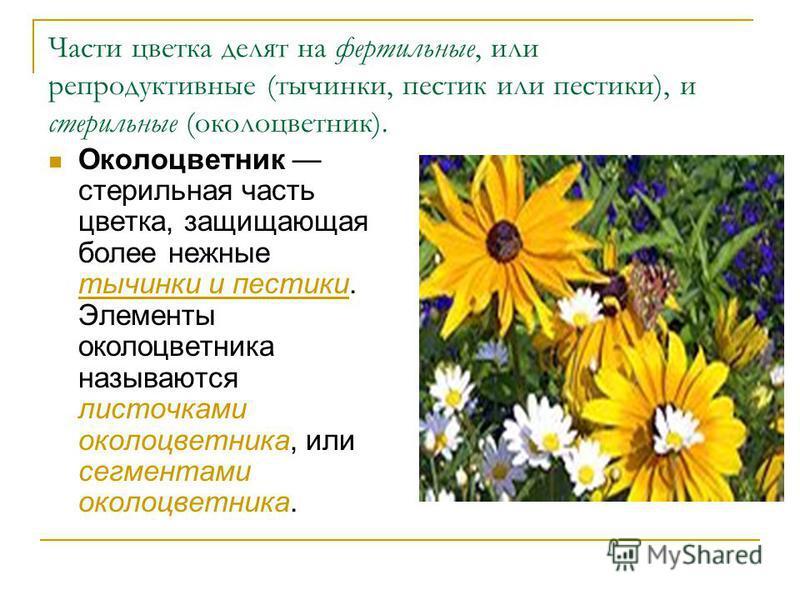 Части цветка делят на фертильные, или репродуктивные (тычинки, пестик или пестики), и стерильные (околоцветник). Околоцветник стерильная часть цветка, защищающая более нежные тычинки и пестики. Элементы околоцветника называются листочками околоцветни
