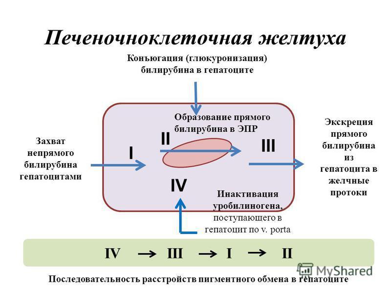 Печеночноклеточная желтуха I II III IV Захват непрямого билирубина гепатоцитами Инактивация уробилиногена, поступающего в гепатоцит по v. porta Экскреция прямого билирубина из гепатоцита в желчные протоки Образование прямого билирубина в ЭПР Конъюгац