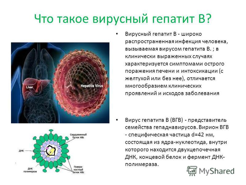 Вирусные гепатиты вич инфекция профилактика