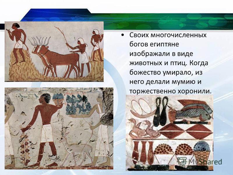 Своих многочисленных богов египтяне изображали в виде животных и птиц. Когда божество умирало, из него делали мумию и торжественно хоронили.